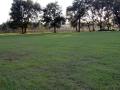 side-yard